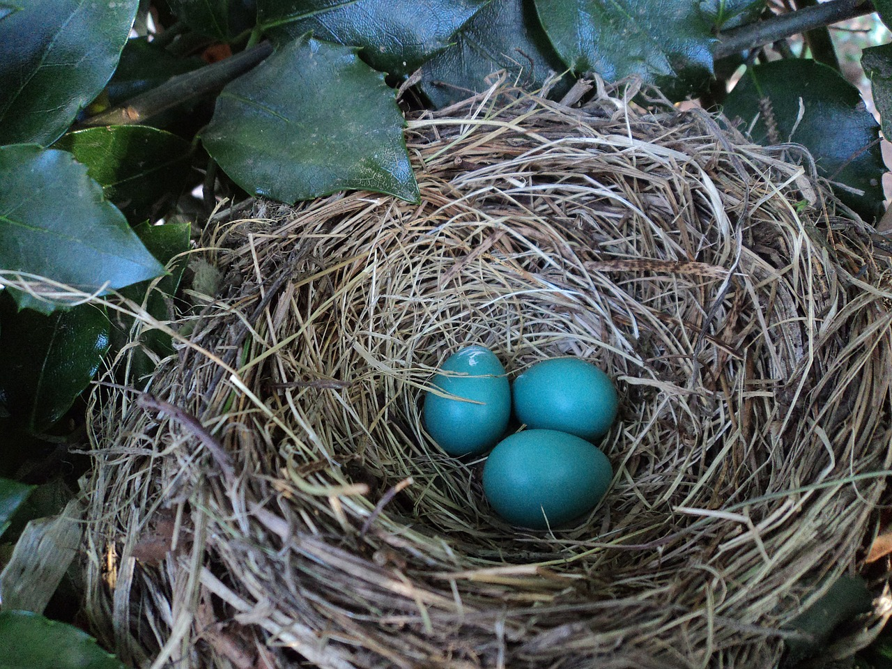 Picture of a nest and eggs
